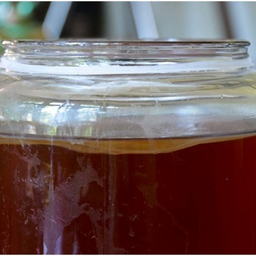 Top 5 Health Benefits of Kombucha Tea