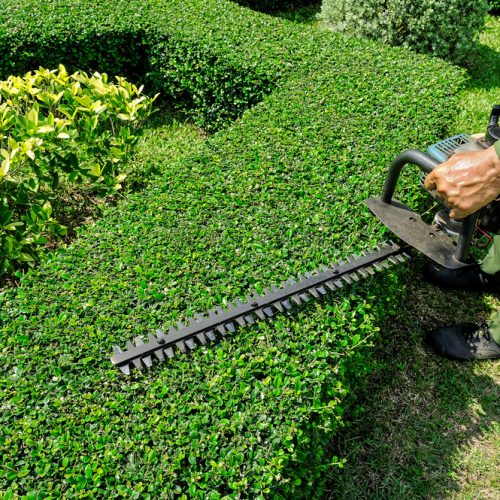 Worry about the maintenance of the Garden! Just higher Landscaping Maintenance Services